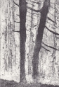 Winter Trees-ARE Etching